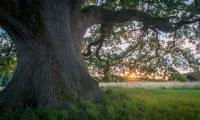HDR-Oak-Sun.jpg